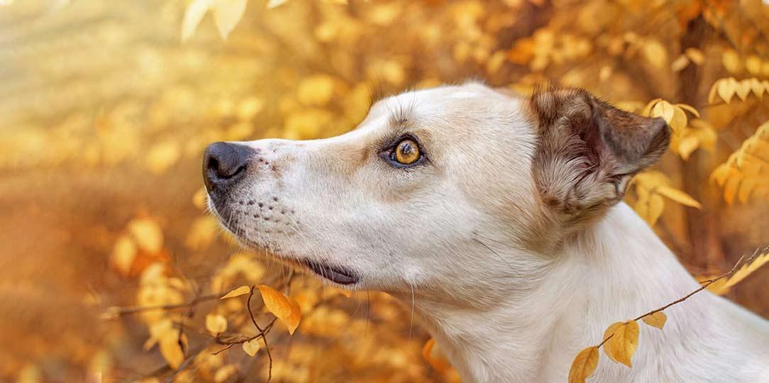 True-Creative-Agency-Hundefotografie-13-1