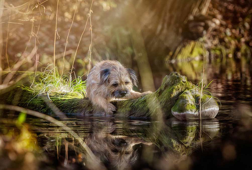 True-Creative-Agency-Hundefotografie-6-1