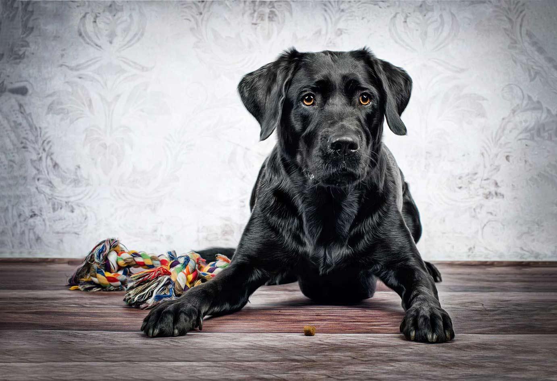 True-Creative-Agency-Hundefotografie-9-1