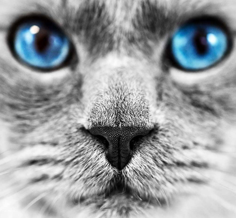 True-Creative-Agency-Katzenfotografie-5-1